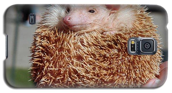 Cute Little Hedge Ball Galaxy S5 Case by LeeAnn McLaneGoetz McLaneGoetzStudioLLCcom
