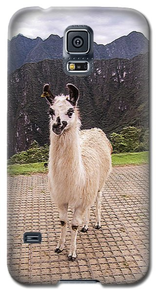 Cute Llama Posing For Picture Galaxy S5 Case