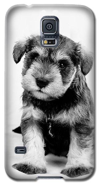 Cute Puppy 1 Galaxy S5 Case by Serene Maisey