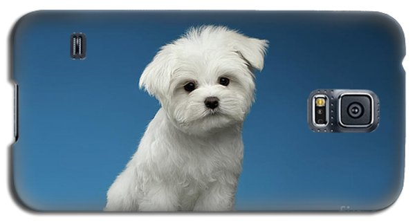 Cute Pure White Maltese Puppy Standing And Curiously Looking In Camera Isolated On Blue Background Galaxy S5 Case by Sergey Taran