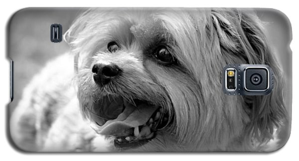 Cute Yorkie - Yorkshire Terrier Dog Galaxy S5 Case by Tracie Kaska