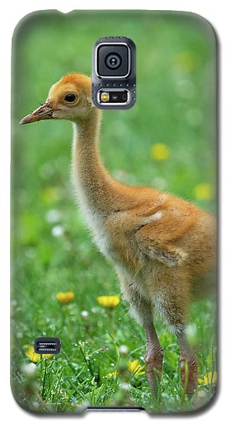 Cuteness Galaxy S5 Case