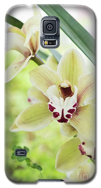 Galaxy S5 Case featuring the photograph  Cymbidium Orchid by Tim Gainey