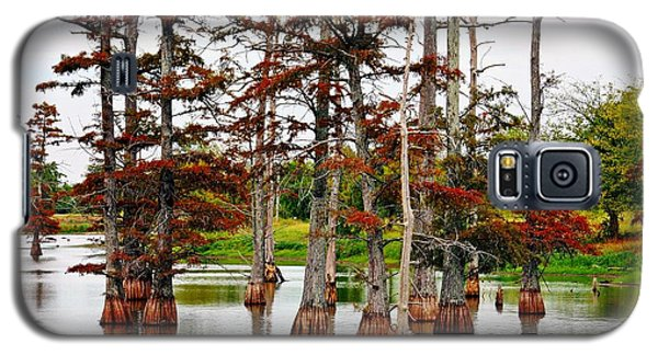 Galaxy S5 Case featuring the photograph Cypress In Autumn by KayeCee Spain