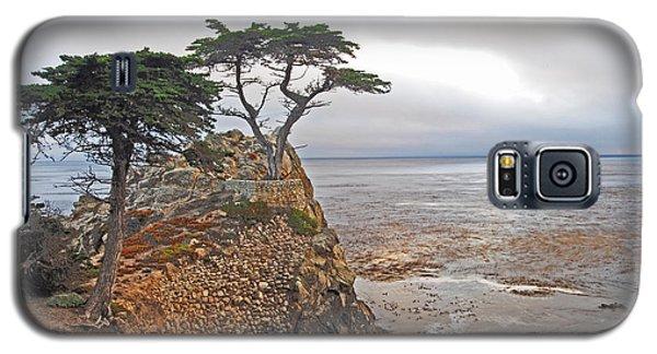 Cypress Tree At Pebble Beach Galaxy S5 Case