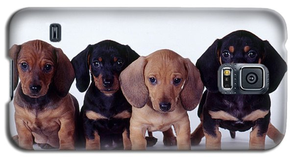 Dachshund Puppies  Galaxy S5 Case