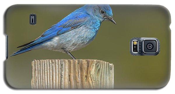Daddy Bluebird Guarding Nest Galaxy S5 Case