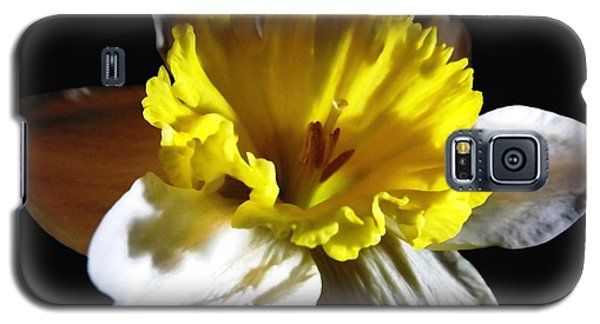 Galaxy S5 Case featuring the photograph Daffodil 2 by Rose Santuci-Sofranko