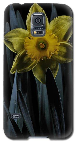 Daffodil By Moonlight Galaxy S5 Case