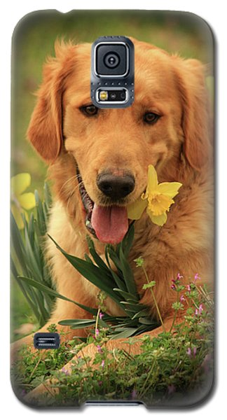 Daffodil Dreams Galaxy S5 Case