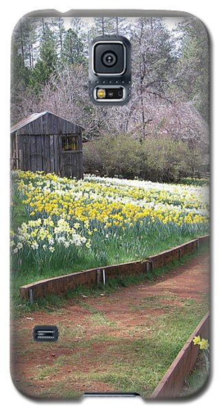 Daffodil Hill Pathway Galaxy S5 Case