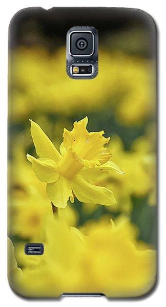 Daffodil Galaxy S5 Case
