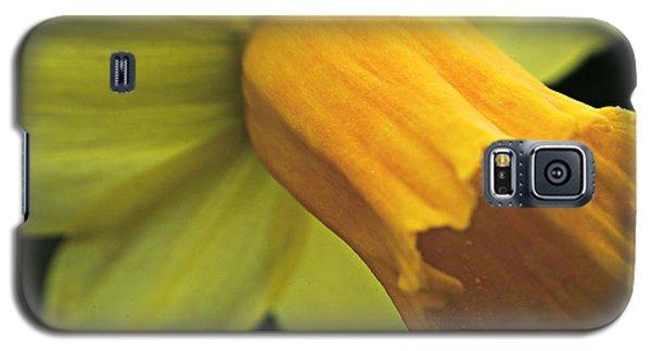 Daffodil - Narcissus - Portrait Galaxy S5 Case