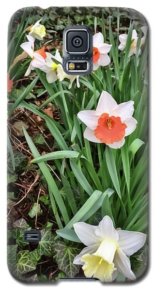 Daffodil - Spring Celebration Galaxy S5 Case
