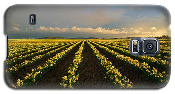 Galaxy S5 Case featuring the photograph Daffodil Storm by Mike Dawson