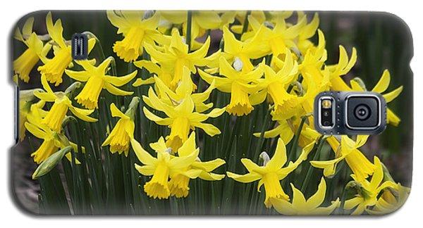 Daffodil Yellow Galaxy S5 Case by Shirley Mitchell
