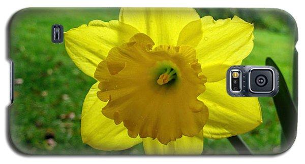 Daffodile In The Rain Galaxy S5 Case