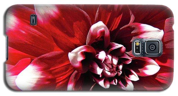 Dahlia Defined Galaxy S5 Case by Randy Rosenberger
