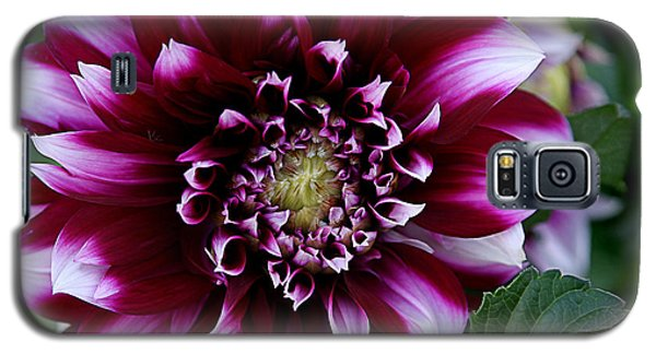 Galaxy S5 Case featuring the photograph Dahlia by Denise Romano