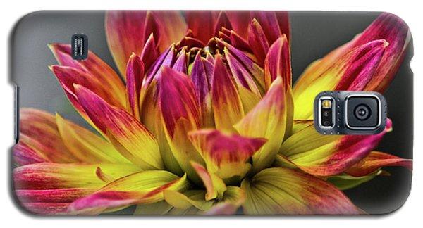 Dahlia Flame Galaxy S5 Case by Joann Copeland-Paul
