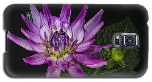 Galaxy S5 Case featuring the photograph Dahlia Glow by Roman Kurywczak