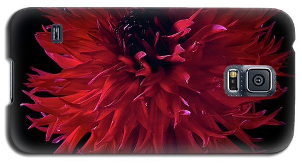 Dahlia 'holyhill Miss Scarlet' Galaxy S5 Case