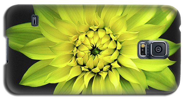 Galaxy S5 Case featuring the photograph Dahlia In Yellow by Julie Palencia