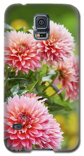 Dahlia Passion Fruit Galaxy S5 Case