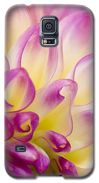Dahlia Petals 5 Galaxy S5 Case