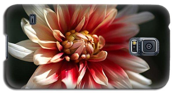 Dahlia Warmth Galaxy S5 Case