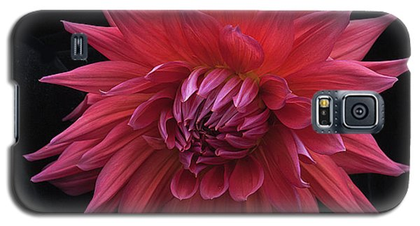 Dahlia 'wyn's King Salmon' Galaxy S5 Case