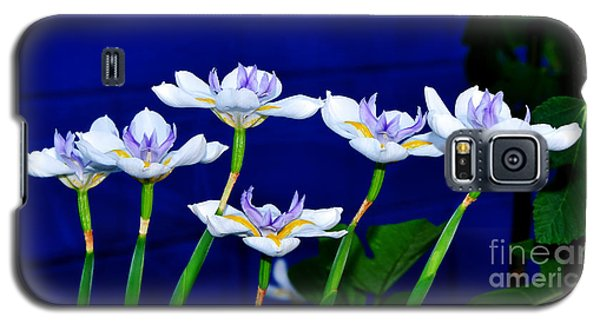 Dainty White Irises All In A Row Galaxy S5 Case