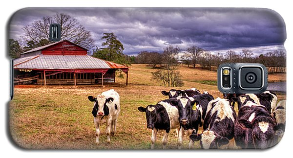 Dairy Heifer Groupies The Red Barn Art Galaxy S5 Case