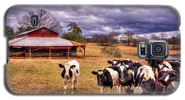 Dairy Heifer Groupies The Red Barn Dairy Farming Art Galaxy S5 Case