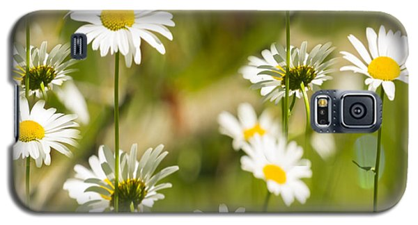 Daisies Galore 2014-1 Galaxy S5 Case