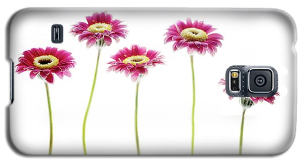 Galaxy S5 Case featuring the photograph Daisies In A Row by Rebecca Cozart