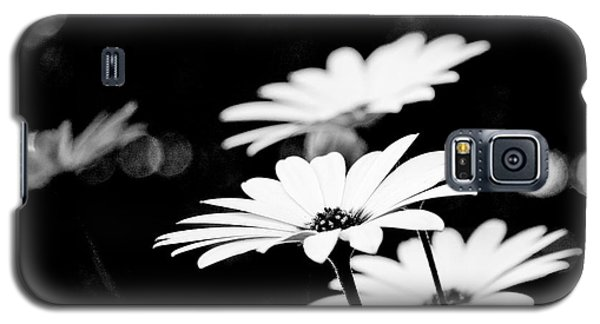 Daisies In Black And White Galaxy S5 Case