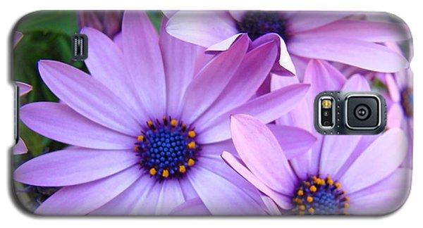 Daisies Lavender Purple Daisy Flowers Baslee Troutman Galaxy S5 Case
