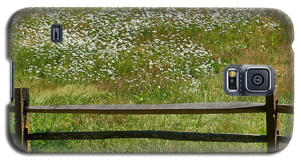 Daisies On The Vineyard Galaxy S5 Case