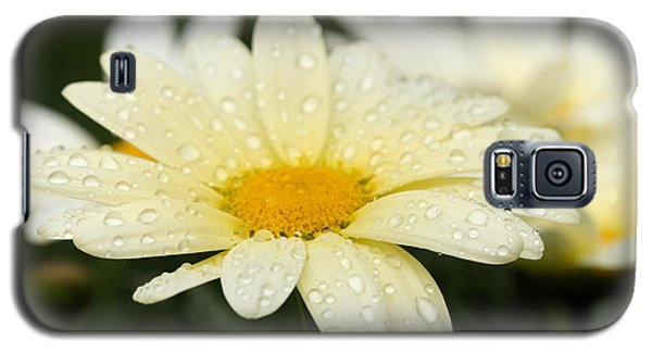 Galaxy S5 Case featuring the photograph Daisy After Shower by Angela Rath