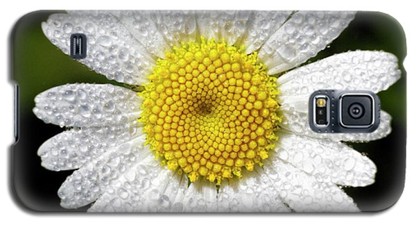 Daisy And Dew Galaxy S5 Case by Rob Graham
