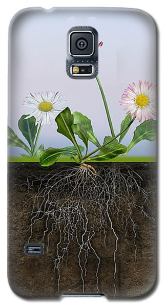 Daisy Bellis Perennis - Root System - Paquerette Vivace - Margar Galaxy S5 Case