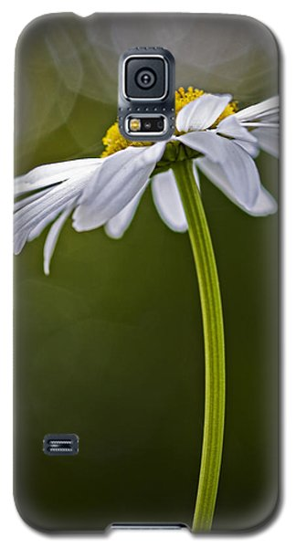 Daisy Galaxy S5 Case by Bob Decker