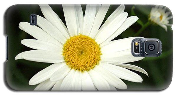 Daisy Days Galaxy S5 Case by Carol Sweetwood