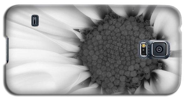 Daisy Galaxy S5 Case - Daisy Flower Macro by Tom Mc Nemar