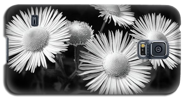 Galaxy S5 Case featuring the photograph Daisy Flowers Black And White by Christina Rollo