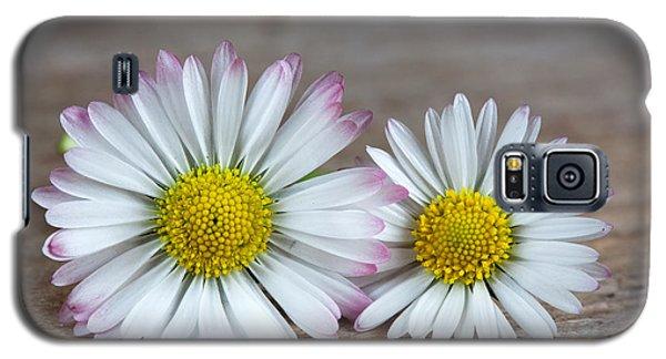 Daisy Galaxy S5 Case - Daisy Flowers by Nailia Schwarz