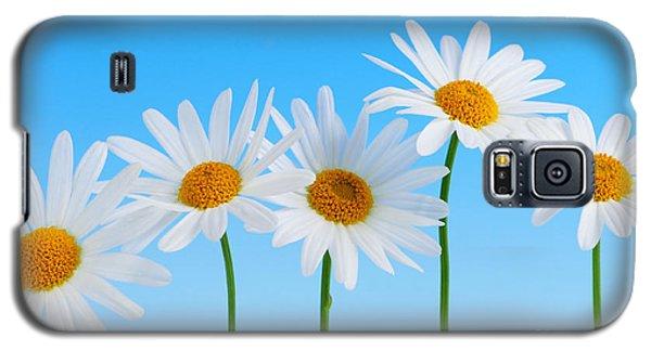 Daisy Flowers On Blue Galaxy S5 Case