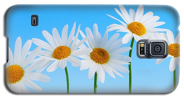 Daisy Flowers On Blue Galaxy S5 Case