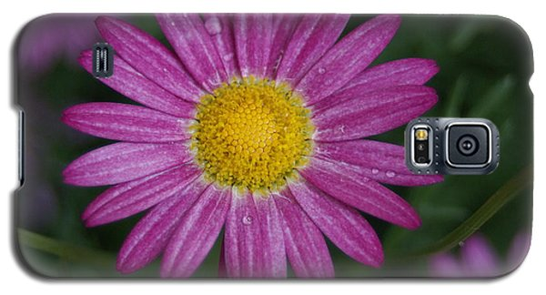 Galaxy S5 Case featuring the photograph Daisy by Heidi Poulin
